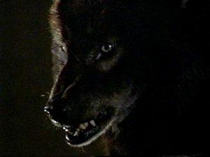 werewolf-wolfen